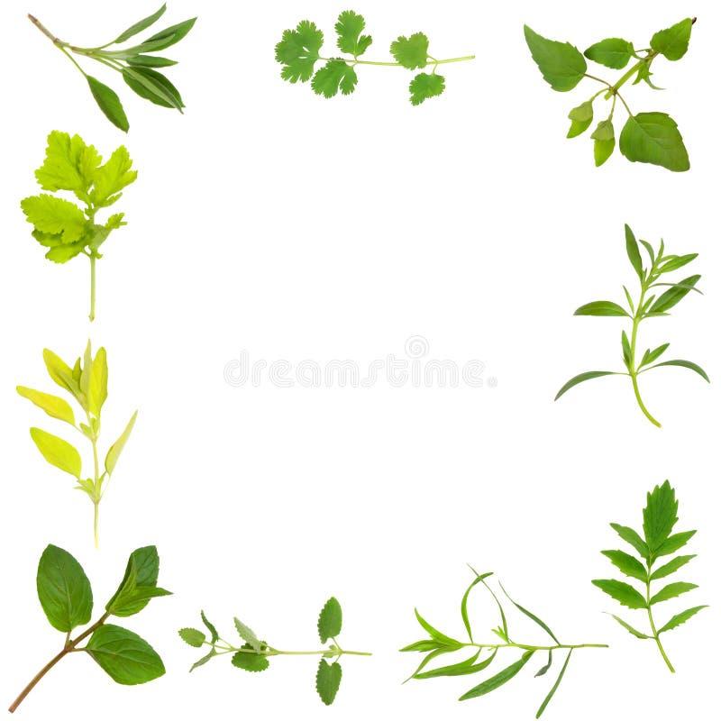 Herb Leaf Border royalty free stock image
