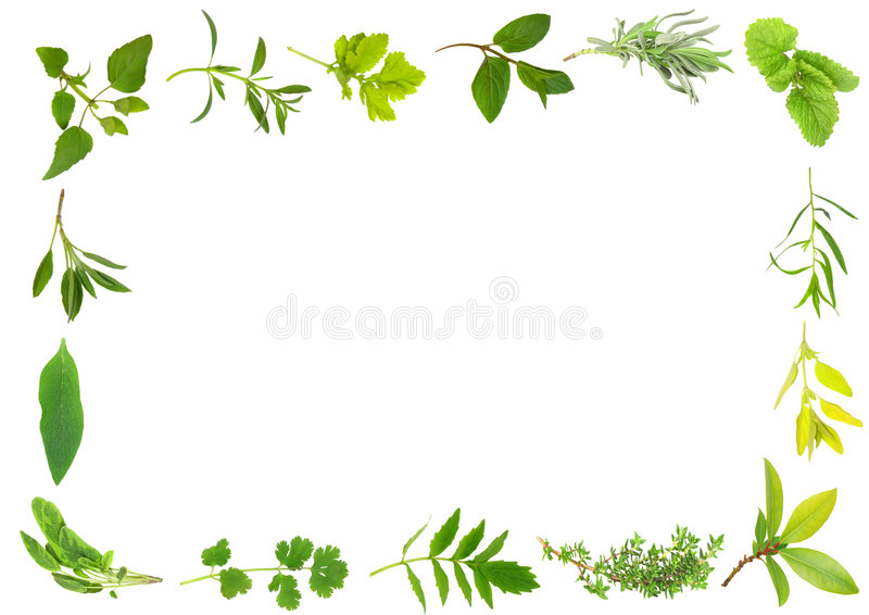 Herb Leaf Border stock illustration