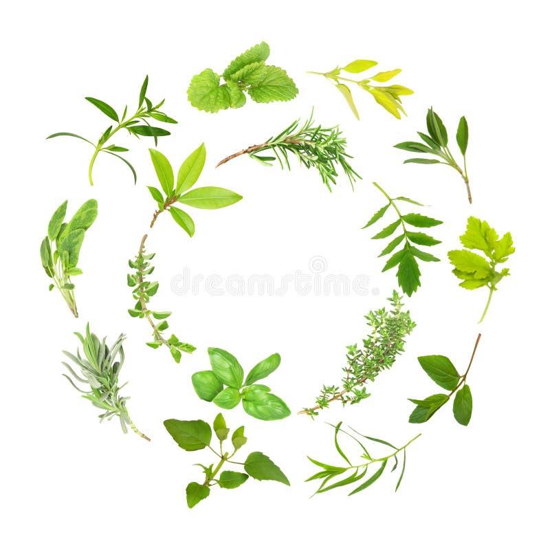 Herb Leaf Circles royalty free stock image