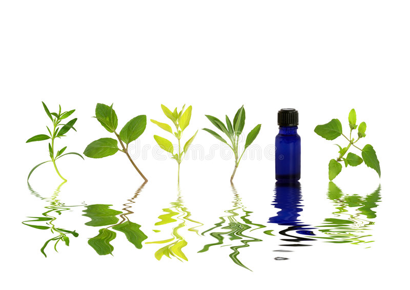 Herb Leaf Freshness. Herb leaf sprigs of hyssop, chocolate mint, golden marjoram, sage, and bergamot and an essential oil blue glass bottle with reflection over royalty free stock images