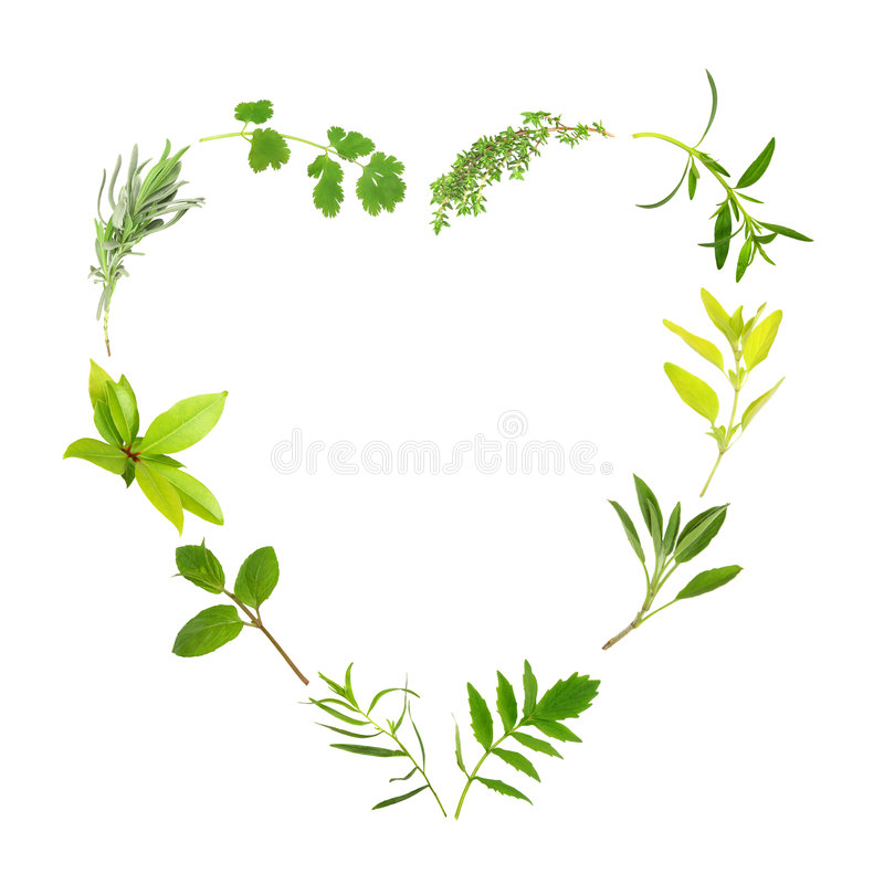 Free Herb Leaf Heart Royalty Free Stock Photography - 8142817