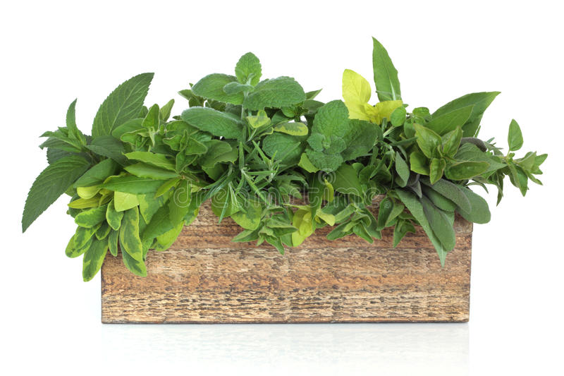 Herb Leaf Mixture. In a rustic wooden plant box including rosemary and bay and varieties of mint, oregano and sage, isolated over white background stock photos