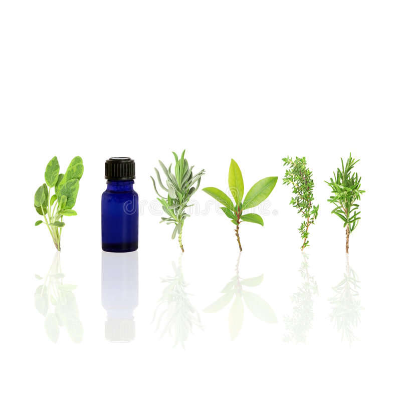 Herb Leaf Purity royalty free stock images