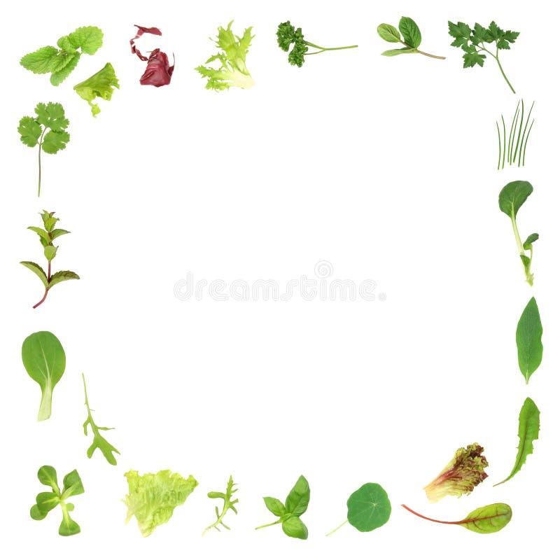 Herb and Lettuce Leaf Border stock illustration