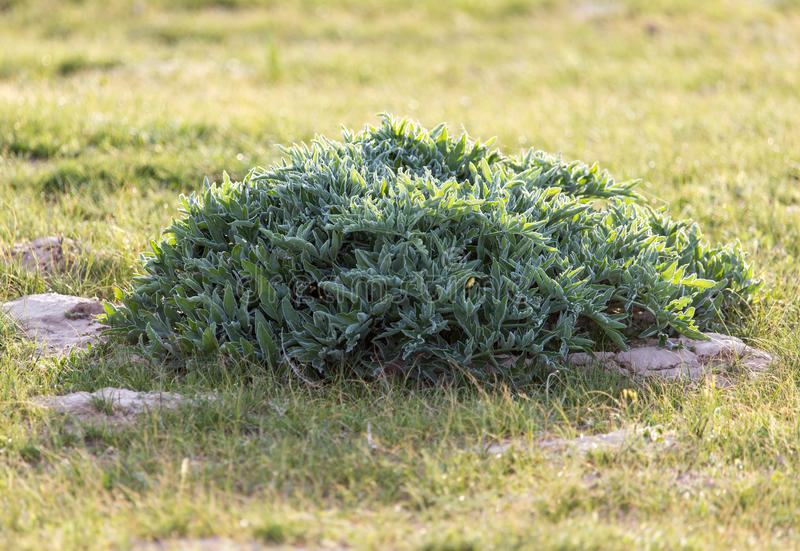 Herb on nature royalty free stock photography