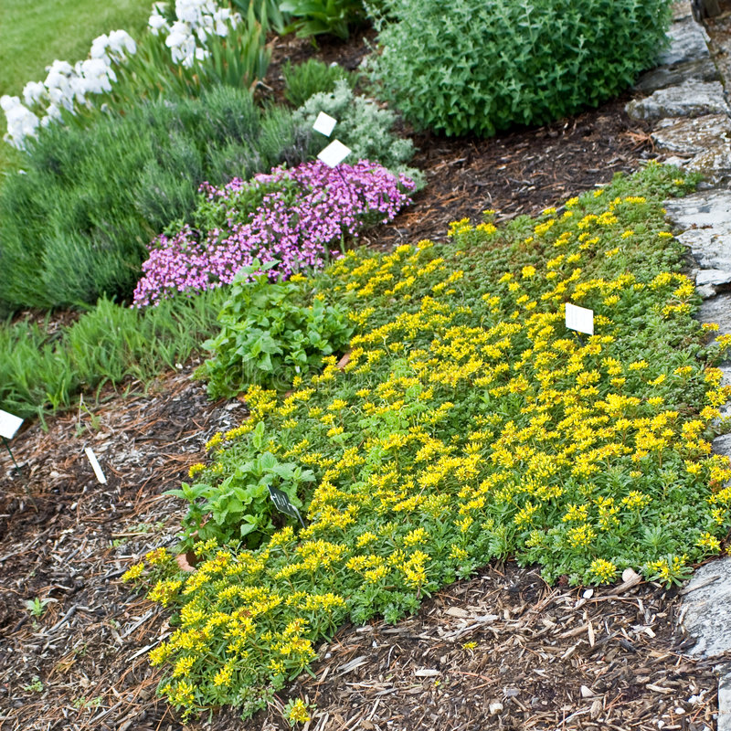 herb ogrodu zdjęcie royalty free