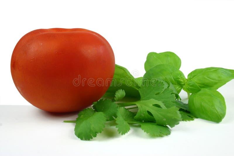 herb pomidorowe zdjęcia stock