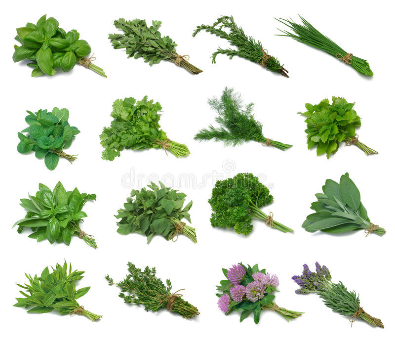 Herb Sampler stock photography