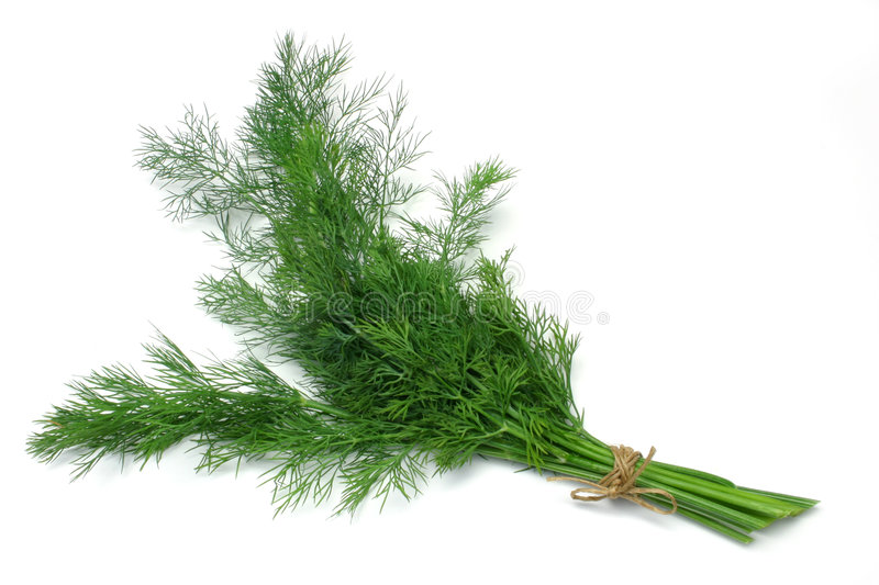 Herb Series Dill royalty free stock photography