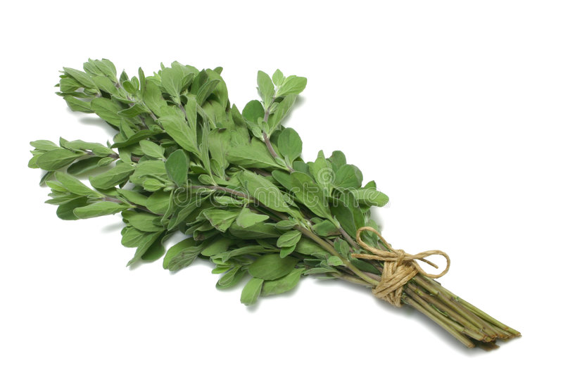 Herb Series Marjoram stock photo