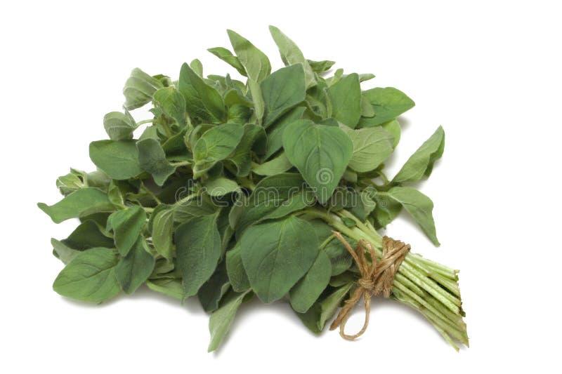 Herb Series Oregano royalty free stock photos