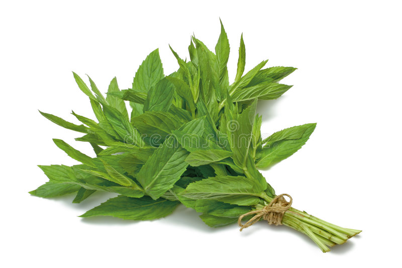 Herb Series Spearmint stock photo