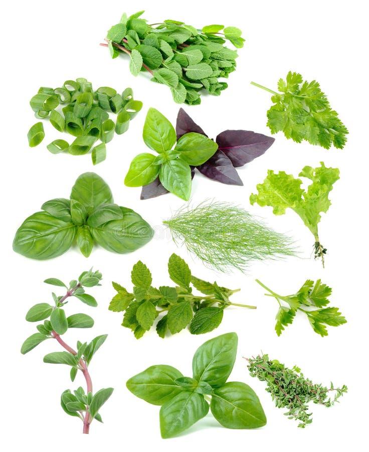 Herb Set fresco y verde fotografía de archivo