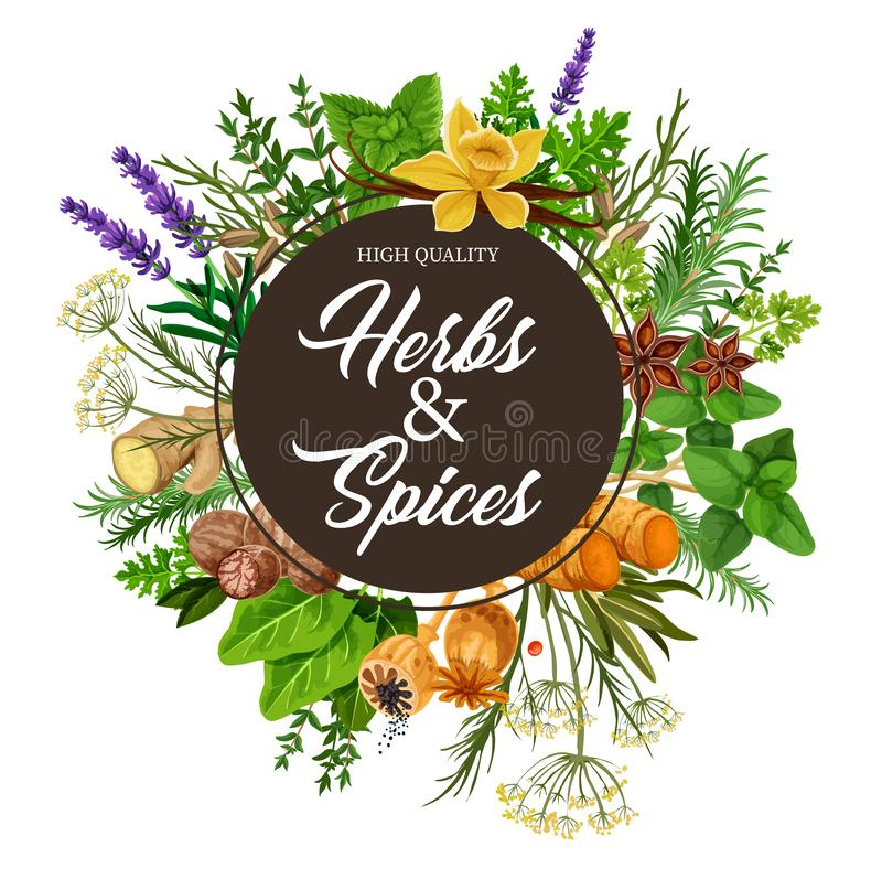 Herbs and spices with frame of plants vector illustration