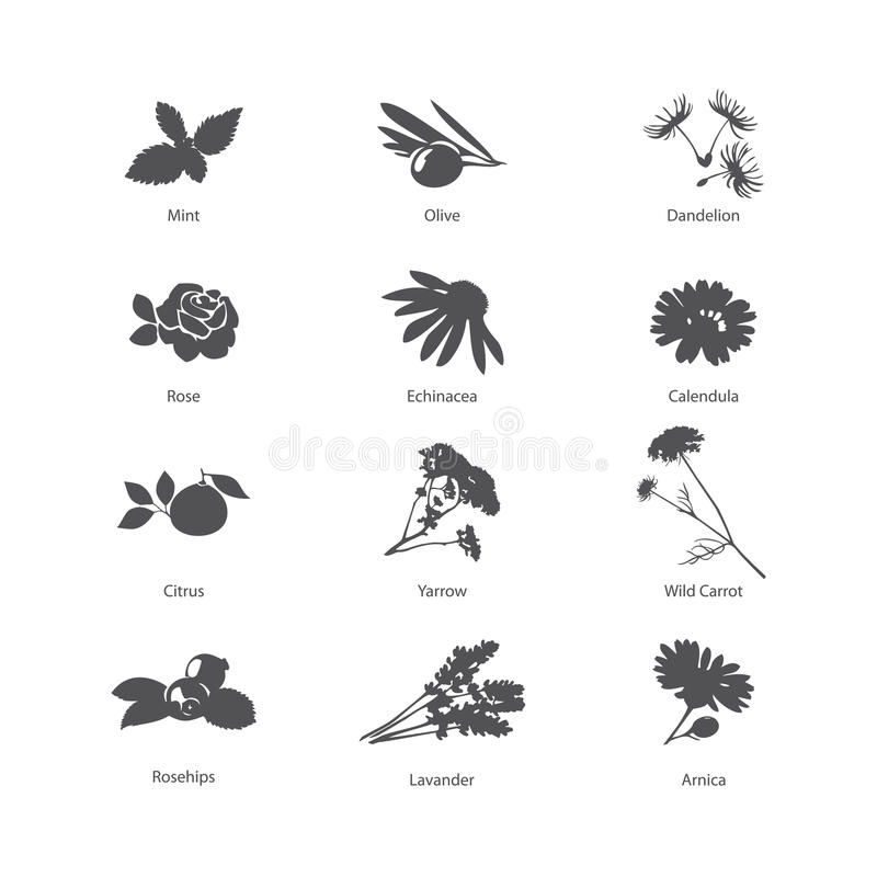 Herb symbols set. Vector Illustration. Herb symbols set royalty free illustration