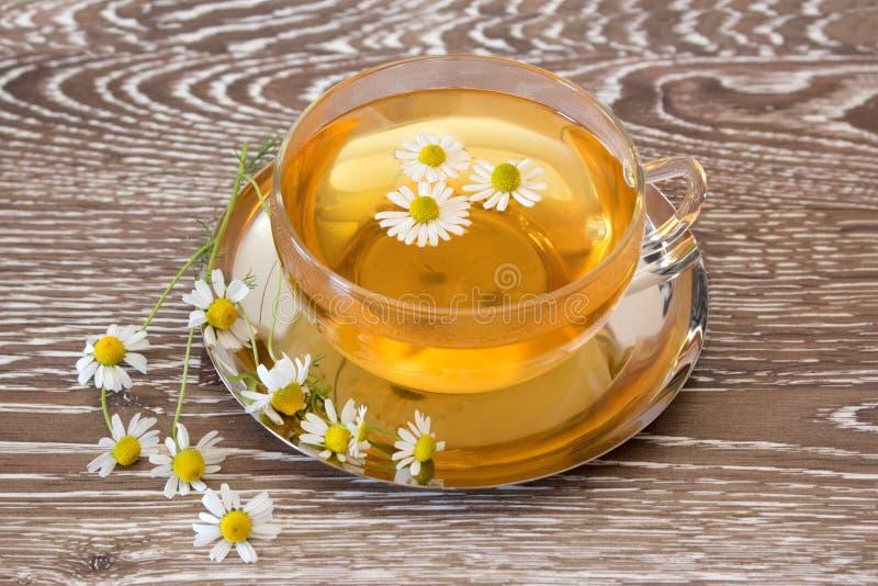 Herb tea with fresh chamomile stock photo