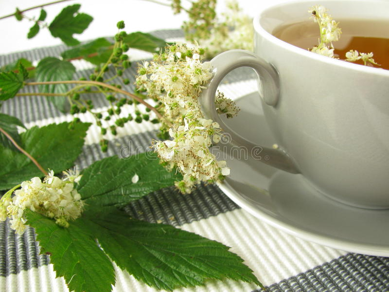 Download Herb tea with meadowsweet stock photo. Image of herbal - 22140088