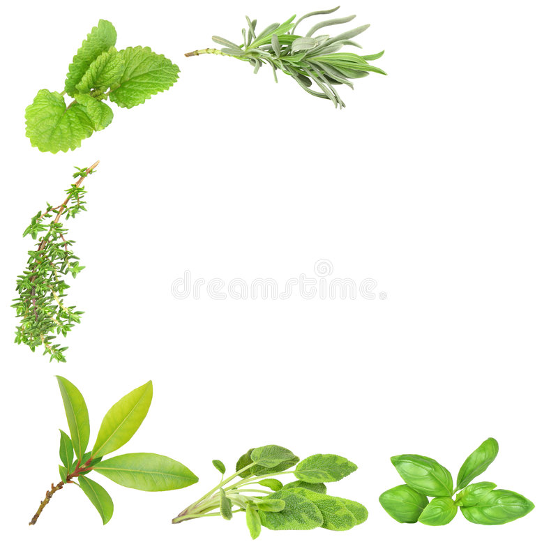 Herb Varieties stock photos