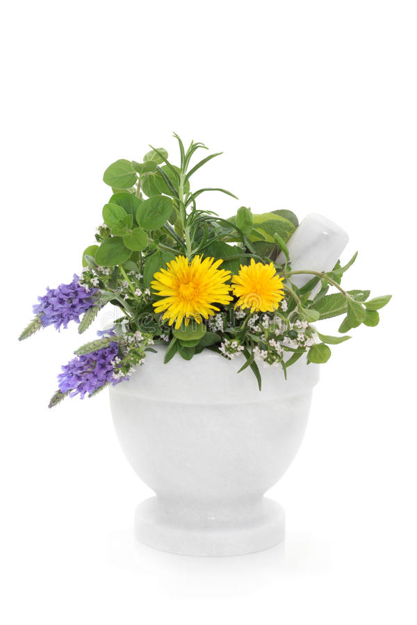 Herb And Wildflower Selection Royalty Free Stock Image