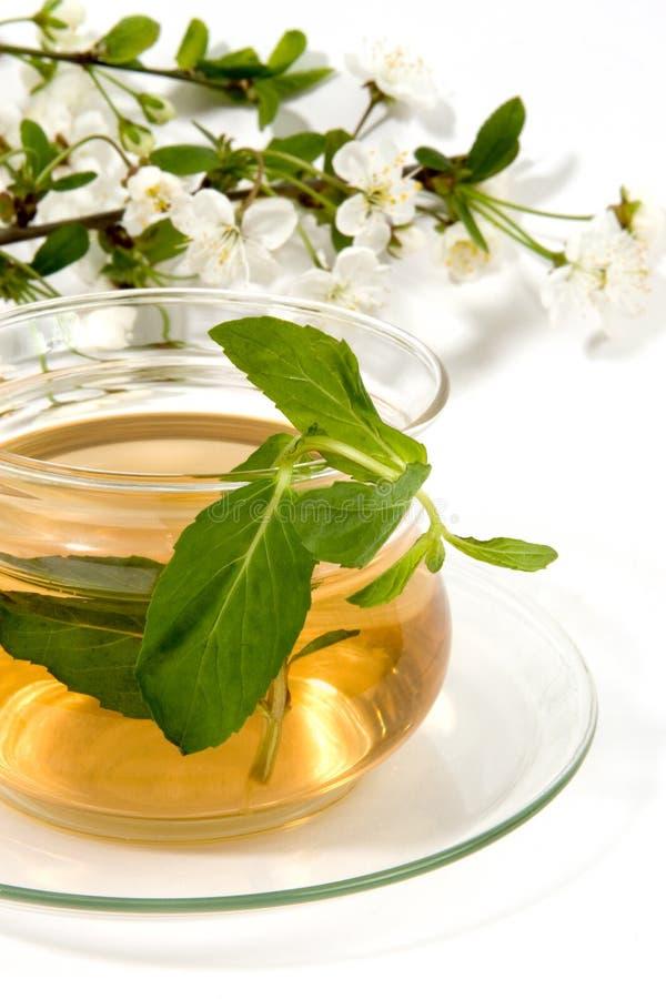 herbaceous чай стоковые изображения rf