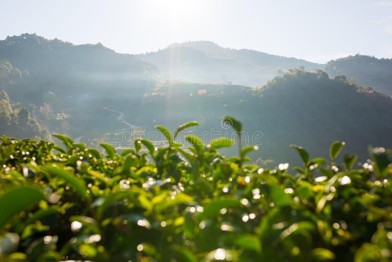 Herbaciana dolina obraz stock