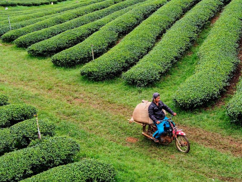 herbaciana kultywacja w Tajlandia obraz royalty free