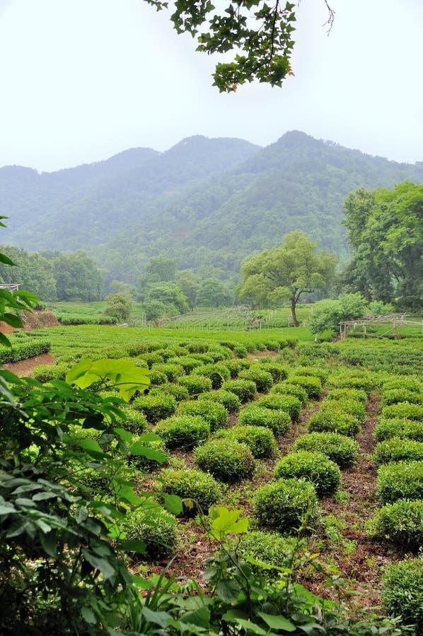 herbaciane pole rośliny obraz royalty free