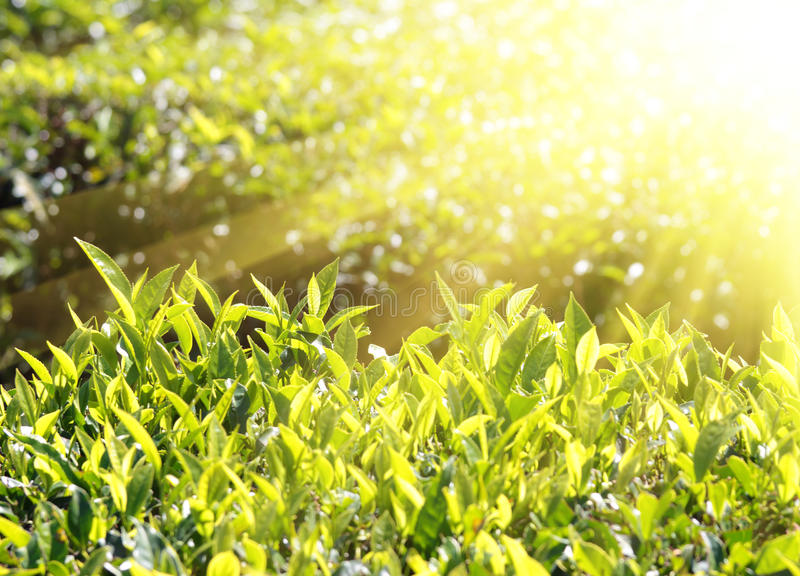 Herbaciane rośliny w sunbeams zdjęcie royalty free