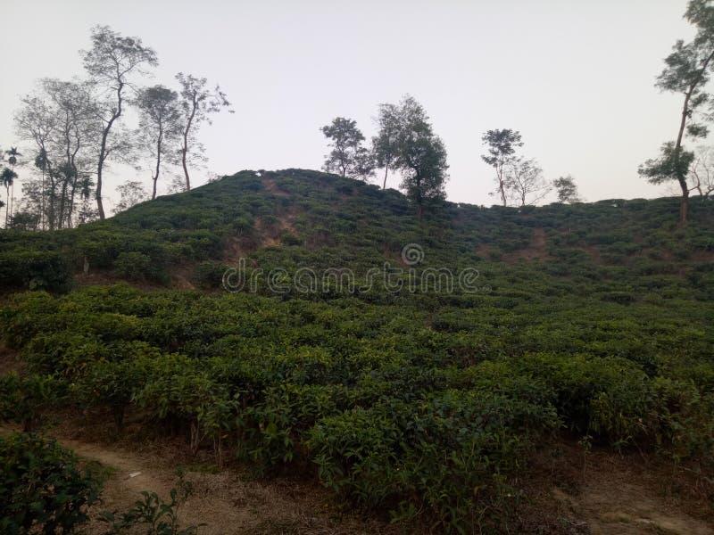 herbacianego ogródu kolaci miejsce zdjęcia stock