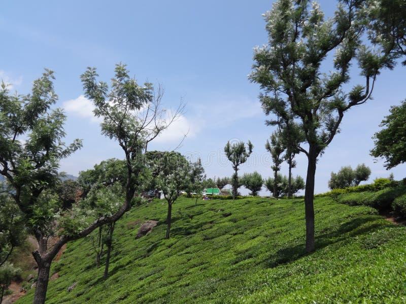 Herbacianego ogródu wspaniały widok z drzewem fotografia royalty free