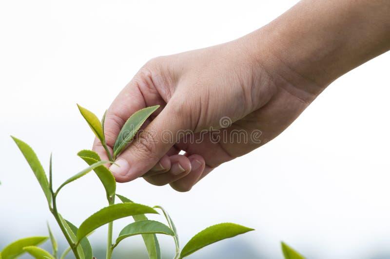 Herbaciany żniwo zdjęcia stock