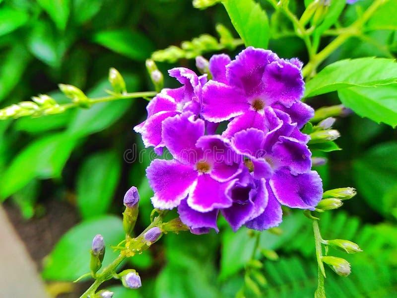 Herbaciany drzewny złoto zdjęcie royalty free