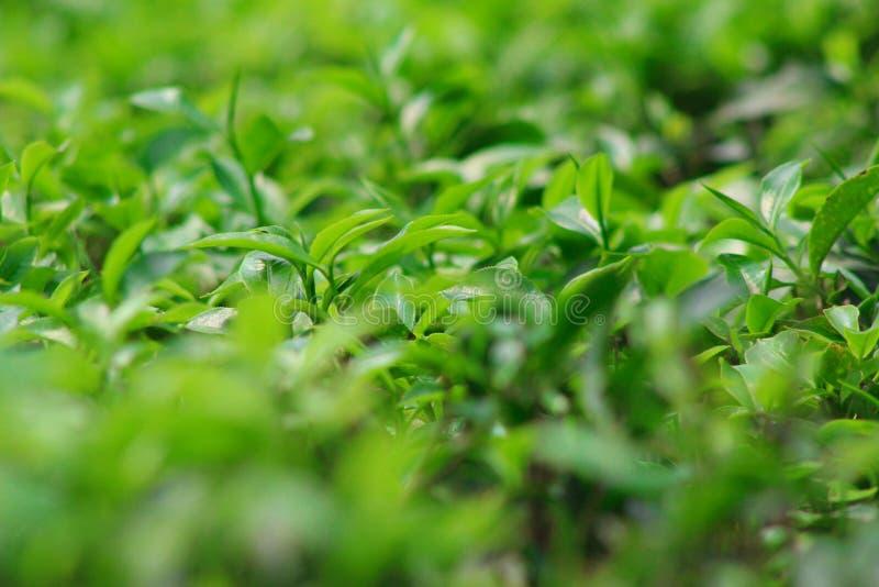 Herbaciany drzewo fotografia stock