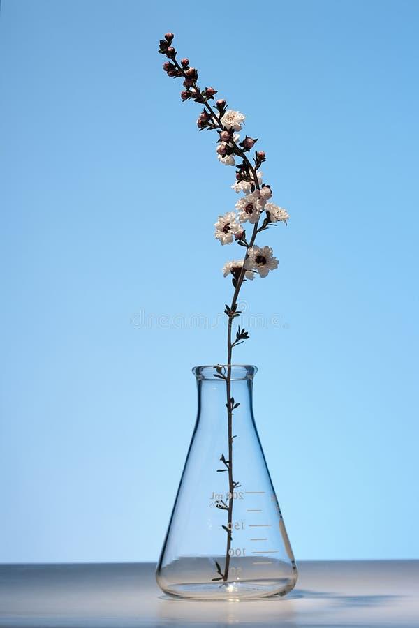 herbaciany drzewo zdjęcie royalty free
