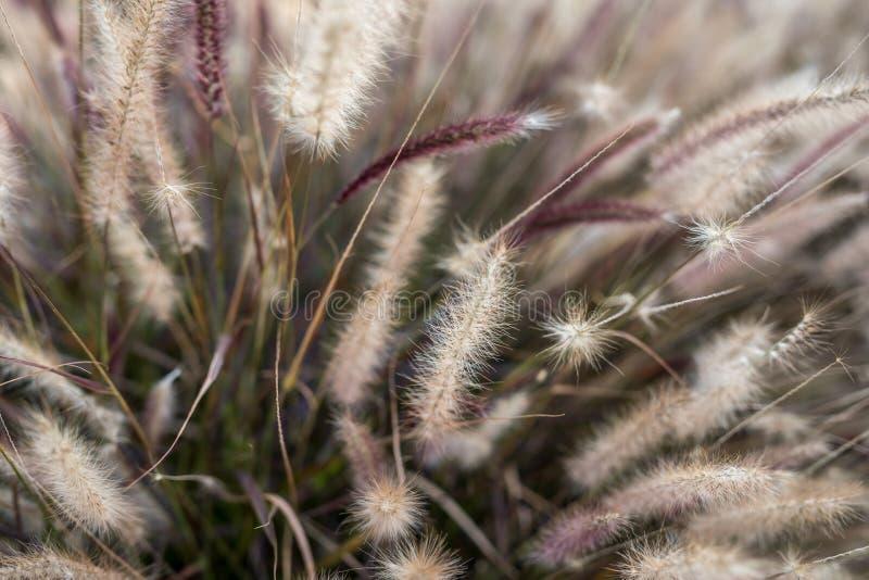 Herbaje amarillo de la hierba del pasto de la hierba herboso foto de archivo