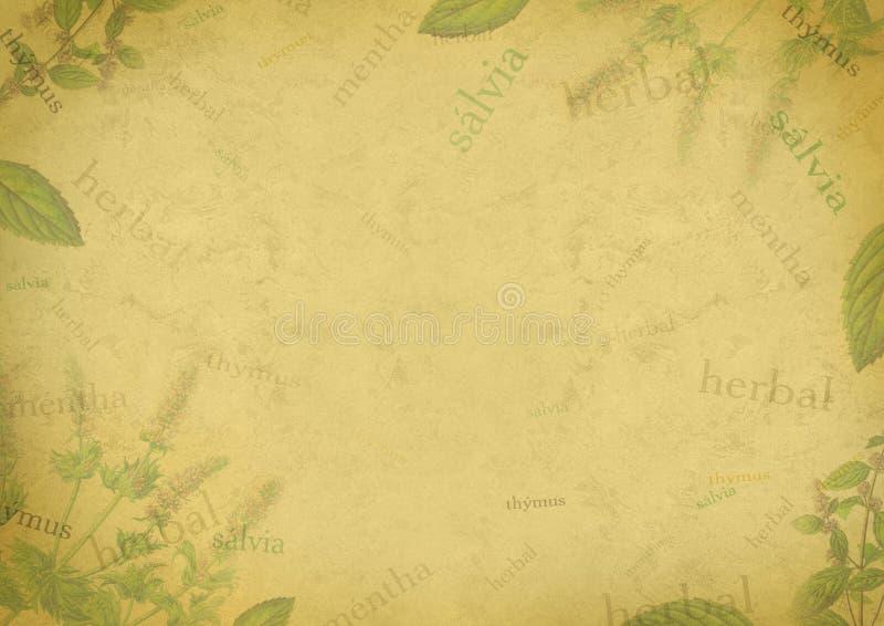Download Herbal Background On Old Paper Stock Illustration - Image: 12279111