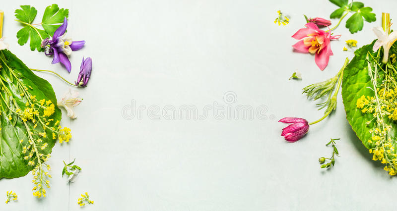 Herbal background with summer or spring garden flowers and plant ,frame. royalty free stock photography