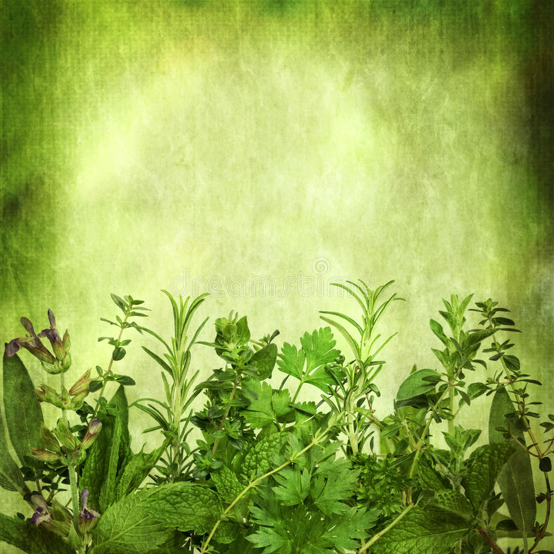 Free Herbal Background With Grunge Effects Stock Image - 35236601