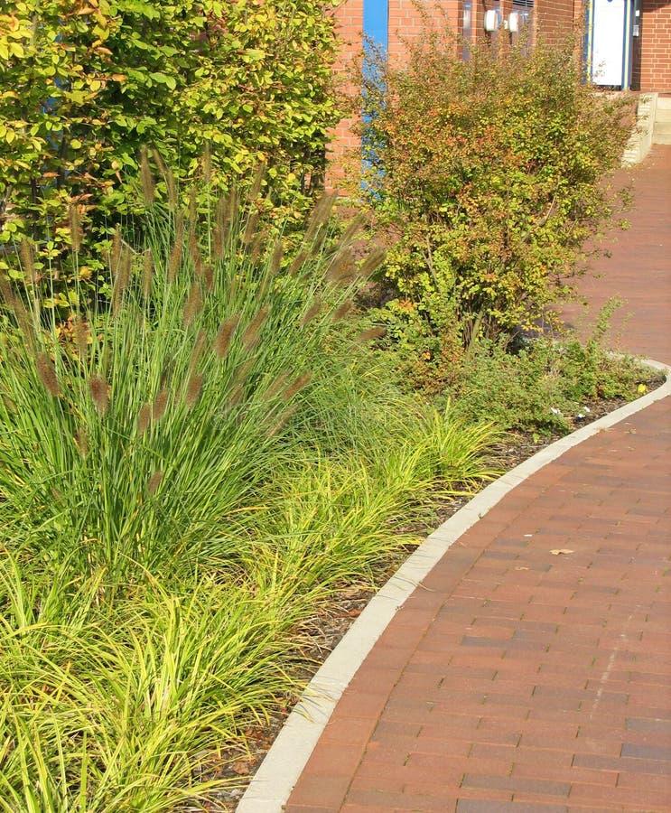 Herbal border on mulch stock photos
