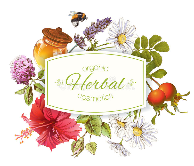 Herbal cosmetics banner royalty free illustration