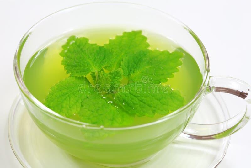 Herbal green tea stock photos