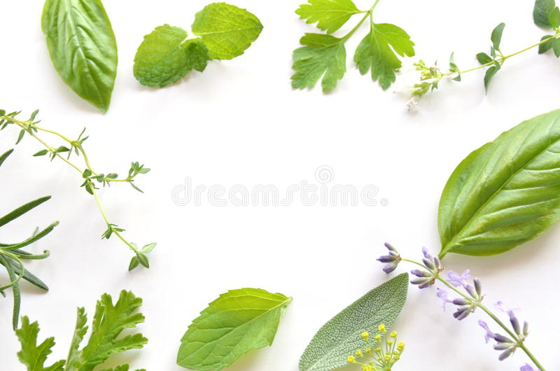 Herbal leaves stock images