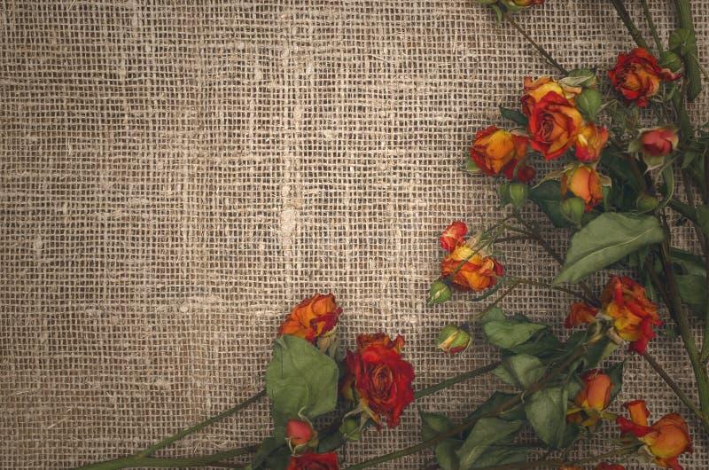 Dry rose flowers. Herbal medicine. royalty free stock photos
