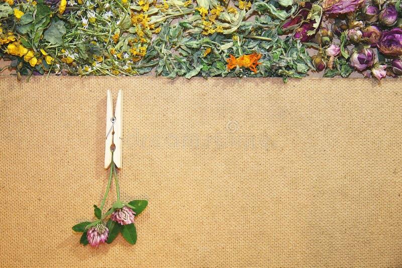 Herbal medicine. Healing herbs, herbal medicine - chamomile, rose, lakspur flowers, card royalty free stock image