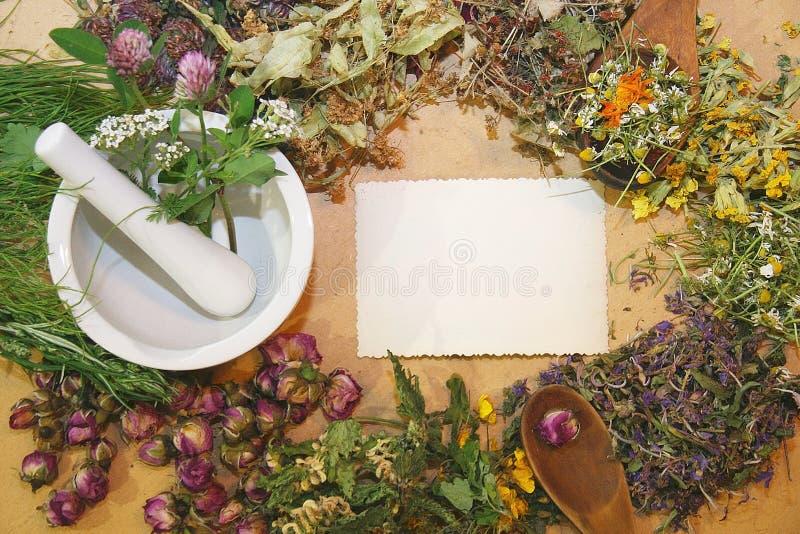Herbal medicine. Healing herbs, herbal medicine - chamomile, rose, lakspur flowers, mortar and pestle, herbal medicine, blank card stock photo