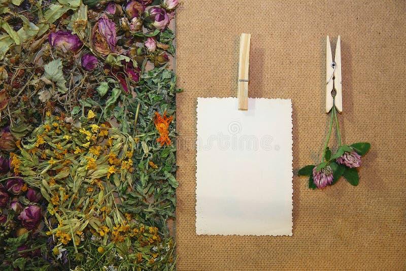 Herbal medicine. Healing herbs, herbal medicine - chamomile, rose, lakspur flowers, blank card stock image
