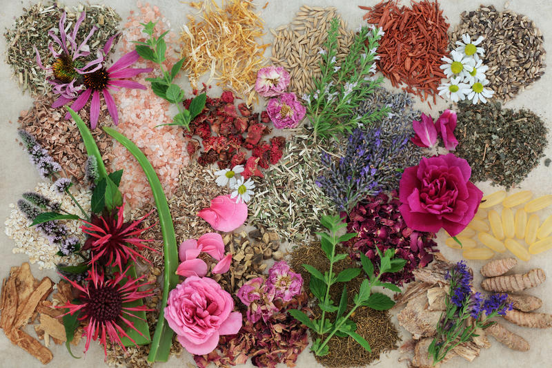 Herbal Medicine for Healing Skin Disorders. Herbal medicine selection with flowers and herbs to heal skin disorders such as psoriasis and eczema on hemp paper royalty free stock photography