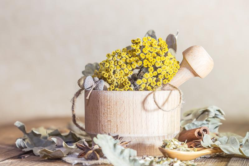 Herbal medicine, homeopathy, the collection of medicinal herbs for tea and medicines. Dried tansy flowers and oak leaves in a. Mortar on a wooden table in a stock photography