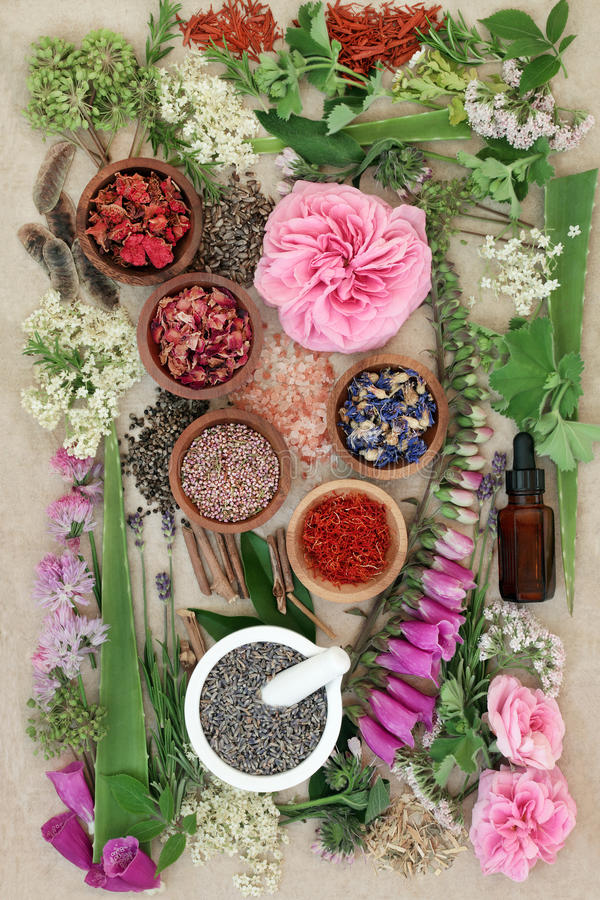 Herbal Medicine Selection. Of fresh and dried herbs and flowers used in natural alternative remedies on hemp paper background royalty free stock images