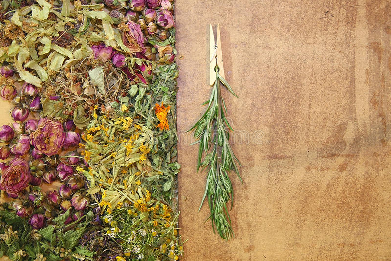 Herbal medicine, wormwood. Healing herbs, herbal medicine - chamomile, rose, lakspur flowers. wood background royalty free stock photos